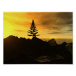 Árbol de pino poster