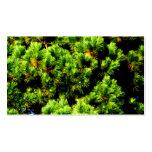 Árbol de pino tarjetas de visita