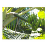 Árbol de plátano postal