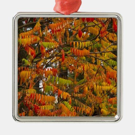 Árbol de Sumac en color del otoño en pescado Adorno Navideño Cuadrado De Metal