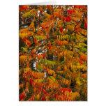 Árbol de Sumac en color del otoño en pescado blanc Tarjeta De Felicitación