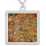 Árbol de Sumac en color del otoño en pescado Collar Plateado