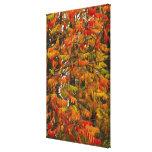 Árbol de Sumac en color del otoño en pescado Impresión En Lienzo