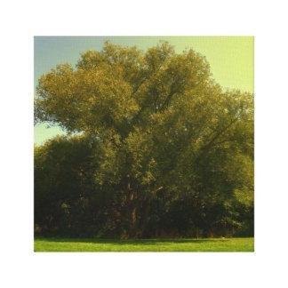 Árbol de Sun, foto canadiense de la naturaleza Impresión En Tela