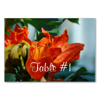 Árbol de tulipán africano