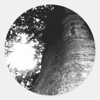 Árbol de un cuento de hadas pegatina redonda