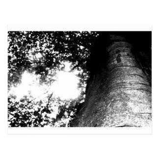 Árbol de un cuento de hadas postal