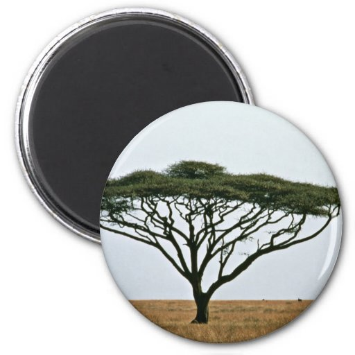 Árbol del acacia de la espina del paraguas imán de frigorífico