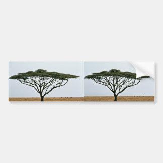 Árbol del acacia de la espina del paraguas pegatina para auto