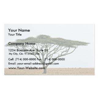 Árbol del acacia de la espina del paraguas tarjetas de visita