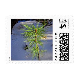 Árbol del bebé en nieve sellos postales