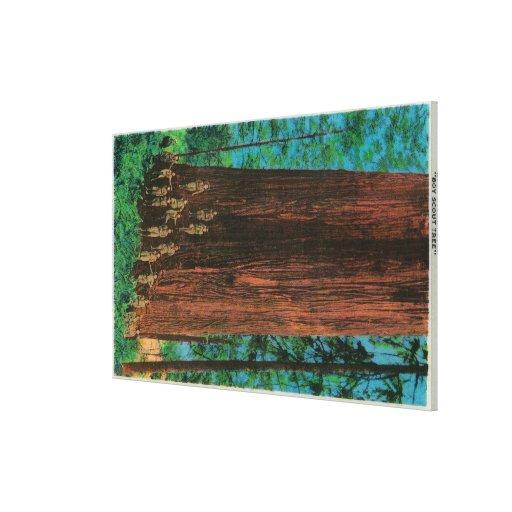 Árbol del boy scout en la secoya HighwayRedwoods,  Impresión En Tela