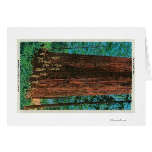 Árbol del boy scout en la secoya HighwayRedwoods,  Felicitación