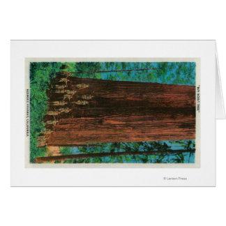 Árbol del boy scout en la secoya HighwayRedwoods,  Tarjeta De Felicitación