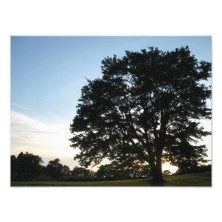 Árbol del cementerio fotografía