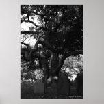 Árbol del cementerio impresiones