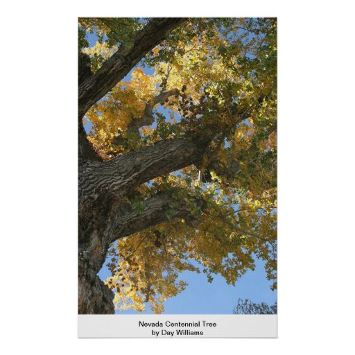 Árbol del Centennial de Nevada Poster