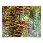 Árbol del color fotos