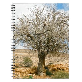 Árbol del desierto que sobrevive el  del calor libros de apuntes con espiral