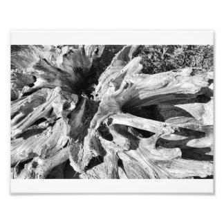 Árbol del Driftwood Fotos