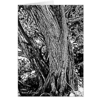 Árbol del enebro tarjeta de felicitación
