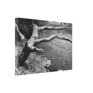 Árbol del invierno impresión en lienzo estirada