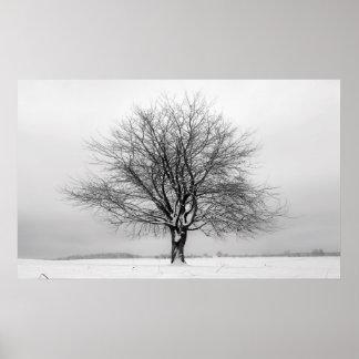 árbol del invierno impresiones