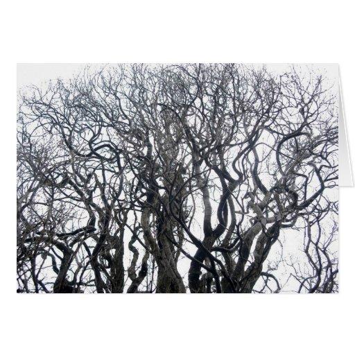 Árbol del invierno tarjetón