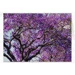 Árbol del Jacaranda en flores de la floración de l Felicitacion