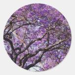 Árbol del Jacaranda en flores de la floración de Pegatina Redonda