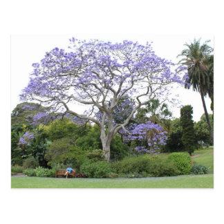 Árbol del Jacaranda Tarjeta Postal