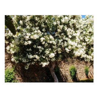 Árbol del jazmín en la floración postal