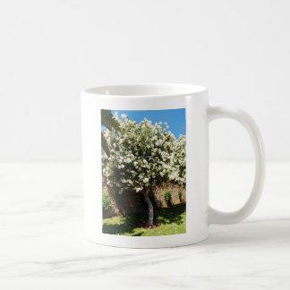 Árbol del jazmín taza clásica
