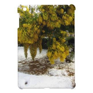 Árbol del Mimosa en la nieve