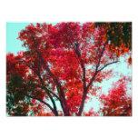 Árbol del otoño arte fotografico