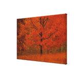Árbol del otoño con follaje rojo lona envuelta para galerias