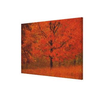 Árbol del otoño con follaje rojo impresiones en lona