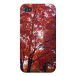 Árbol del otoño de Michigan iPhone 4 Cárcasa