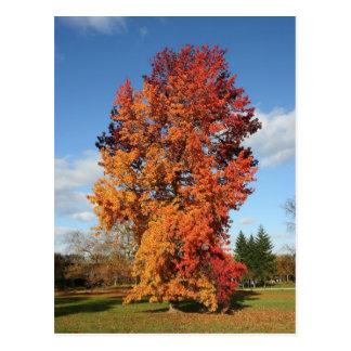 árbol del otoño postal
