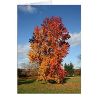 árbol del otoño tarjeta de felicitación