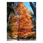 Árbol del otoño tarjeta postal