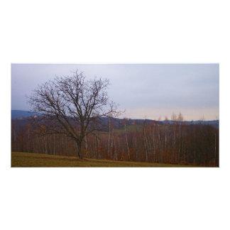 Árbol del otoño tarjetas fotograficas