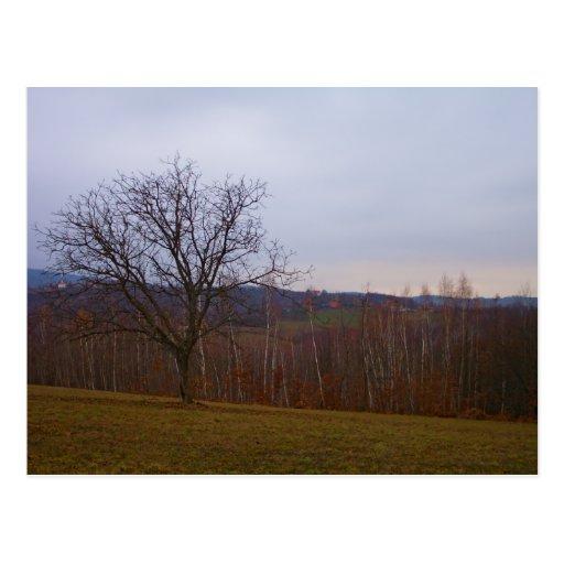 Árbol del otoño tarjetas postales