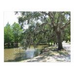 Árbol del pantano, isla de Avery, Luisiana Tarjetas Postales