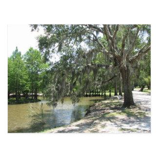 Árbol del pantano isla de Avery Luisiana Tarjetas Postales