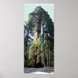 Árbol del parque nacional de secoya impresiones