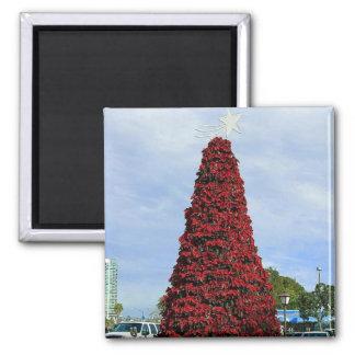 Árbol del Poinsettia del navidad en San Diego Imanes De Nevera