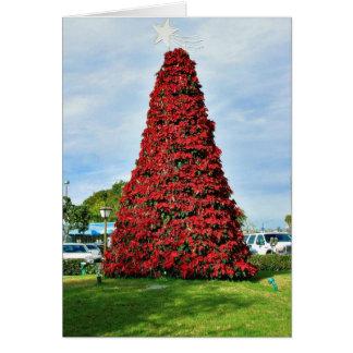 Árbol del Poinsettia del navidad en San Diego Tarjetón