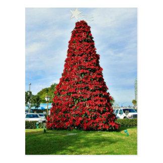 Árbol del Poinsettia del navidad en San Diego Tarjetas Postales