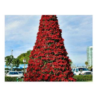 Árbol del Poinsettia del navidad en San Diego Tarjeta Postal
